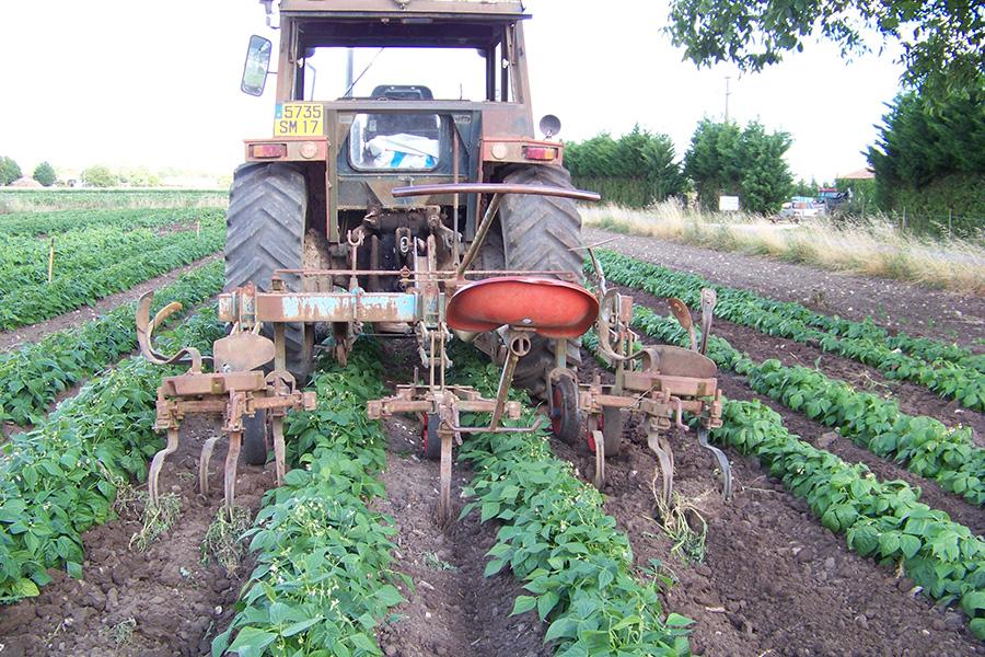Domaine coussot agriculture biologique l gumes bio - Desherbage bio efficace ...